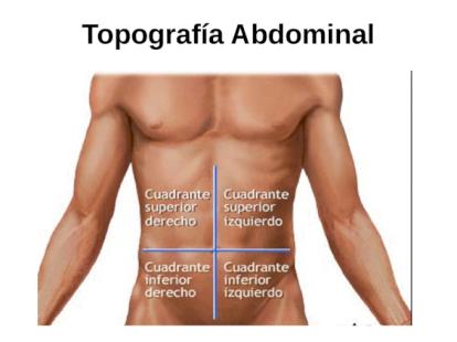 organos que hay en el hipocondrio derecho