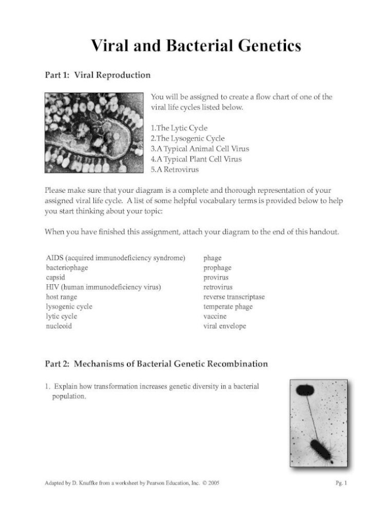 Virus And Bacteria Worksheet Answers / Virus And Bacteria ...